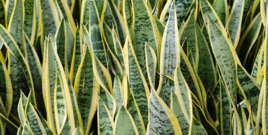 56807-os-x-melhores-tipos-de-plantas-para-cultivar-dentro-de-casa